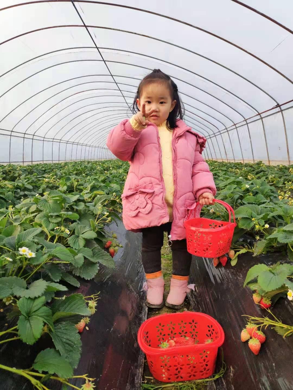 """【成都親子活動】""""快樂草莓行""""2021年草莓嘉年華活動"""
