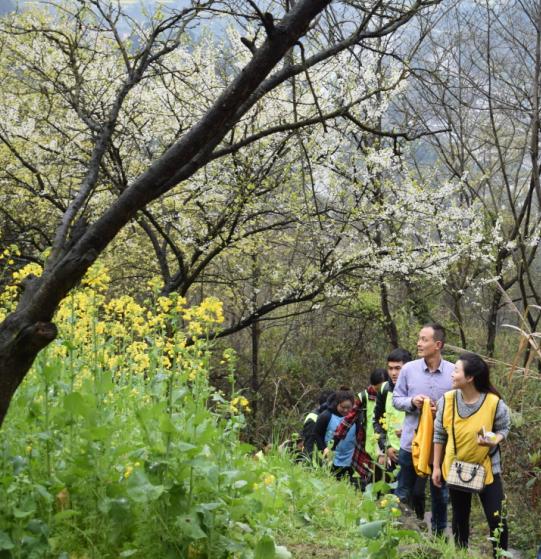 部分活動介紹:徒步、賞花